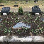 Grabstelle des XV. Leopoldina-Präsidenten C. H. Knoblauch auf dem Stadtgottesacker Halle